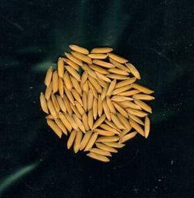 Grain2